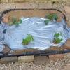 家庭菜園 ズッキーニ、きゅうり、メロンの植え付け