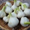 【家庭菜園】我が菜園の収穫記録 季節の野菜たち(5月)