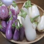 【シェア畑】千葉県で近くの畑を探す|料金と一覧まとめ