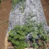 小玉スイカに「わらイラズ」|便利な敷きわらの代用品|ウリハムシ対策にも
