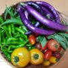 家庭菜園、ガーデニング情報を「楽天マガジン」で入手|1ヶ月無料読み放題