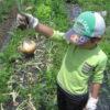 手ぶらで畑にGo! レンタル農園「シェア畑」の魅力とは|評判、料金