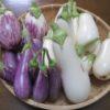 ナスとピーマンの植え替え|種まきから栽培中