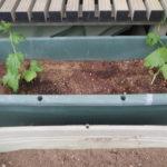 緑のカーテン ゴーヤとメロンの植え付け と その後の経過(追記)