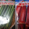 【オクラの多本仕立て栽培】丸オクラと赤オクラの植え付け