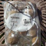 ジャガイモの植え付け|昨年収穫したジャガイモも植えてみる