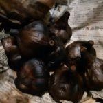簡単!お家で黒にんにくを作る|10日目 ついに試食