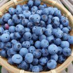 ラビットアイブルーベリーの収穫|今年は豊作!