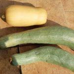 【市民農園】変わり種カボチャの収穫|鹿ケ谷、バターナッツ、宿儺他
