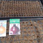 タマネギのセルトレイ種まき|ベト病に強いラッキー