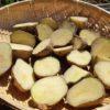 ジャガイモの植え付け|キタアカリ メークイン