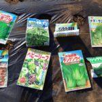 葉物野菜の種まき 穴あきマルチに混植