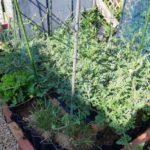 【キッチンガーデン】スイカとメロンの空中栽培用のネットをはりました